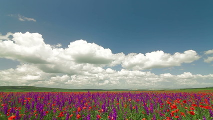 Colorful summer landscape with blooming meadow