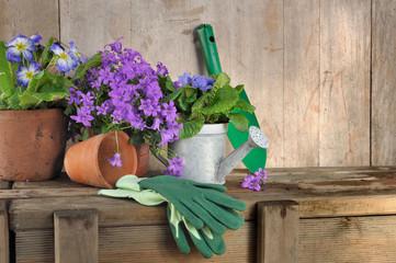 pots de fleurs et outils de jardinage sur fond bois