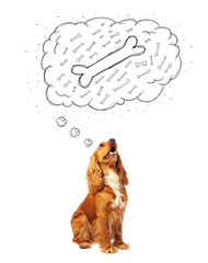 Cute dog with thought bubble thinking about a bone