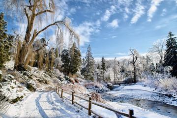 Frozen Park Landscape