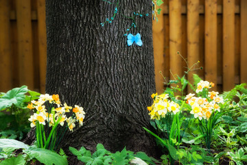 Butterfly on a Tree in a Spring Garden