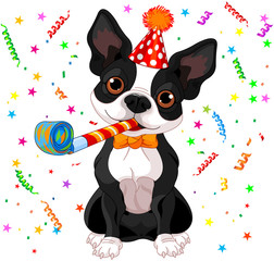 Boston terrier party