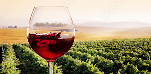 Bicchiere di Vino rosso in Vigneto - 76274363