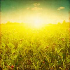 Grunge image of summer field at sunset.