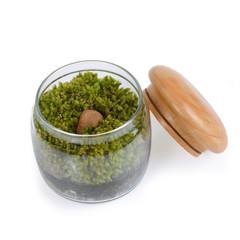 Moss terrarium.