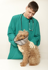 Vet and toy poodle