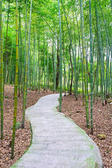 path in the bamboo grove © victor217