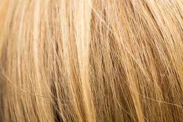 background of women's hair