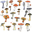 Set of watercolor drawing mushrooms - 76290599