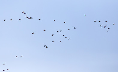 a flock of ducks on a blue sky