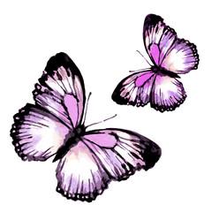 butterfly399