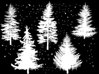 five fir silhouettes isolated on black