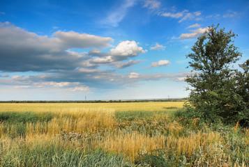 Степной пейзаж. Крымская степь в июне