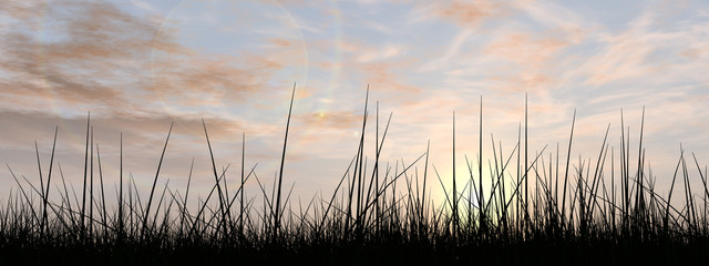 Black grass over sky sunset banner