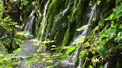 Waterfall Behind Sunlit Leaves