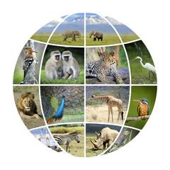 Globe design with photographs animals