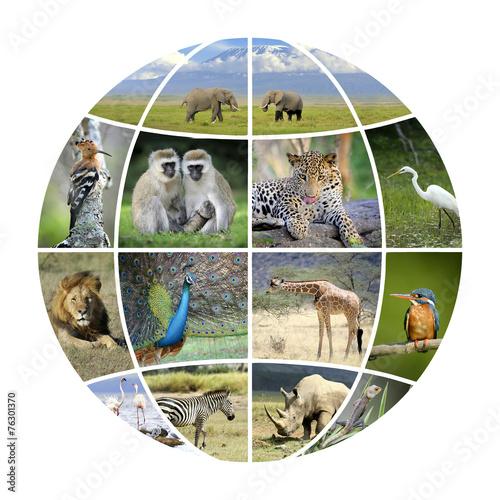 Fotobehang Vlinder Globe design with photographs animals