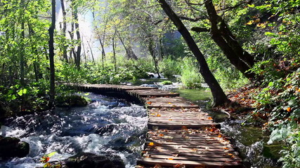 Stream and Wooden Path in the Forest