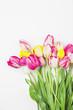 canvas print picture - Bunte Tulpen vor weißem Hintergund