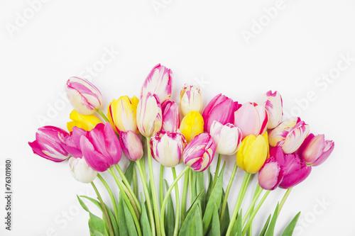 canvas print picture Bunte Tulpen vor weißem Hintergund