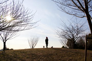 a silhouette of woman who taking the dogs on a walk