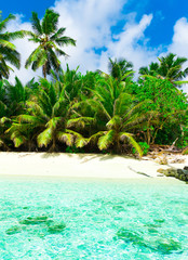 Coconut Summer Paradise