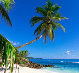 Palm Scene Beach