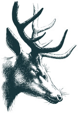 Deer vector sketch