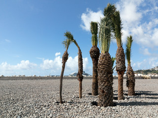 Palmengruppe im neuen Hafen von Funchal, Madeira