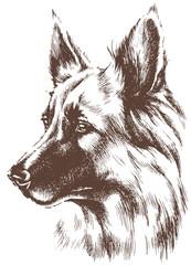 Shepherd dog sketch