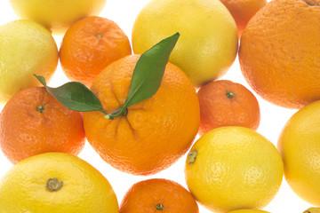 Citrus fresh fruit background