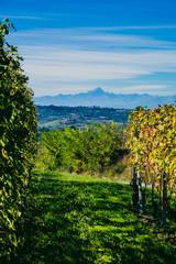 Paesaggio autunnale nelle vigne delle Langhe