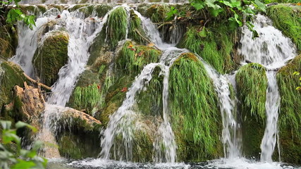Waterfall with Tree Trunk
