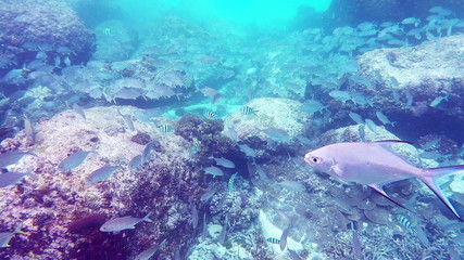Fishes swimming through coral reef in Seychelles