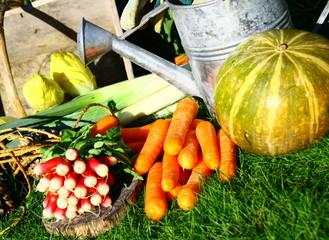 botte de carottes,radis,endives et courge au potager