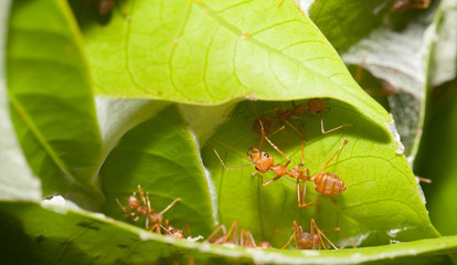 Ants soldier protect the house