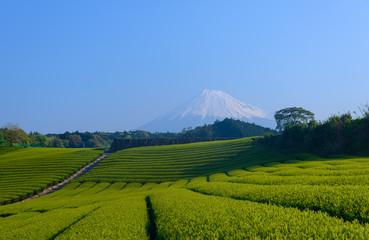 Mt.Fuji and Tea plantation in Fuji city, Shizuoka, Japan