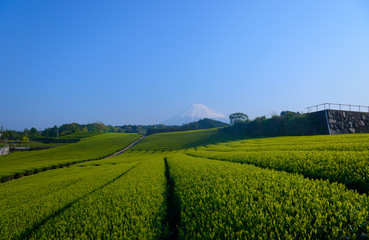 Mt.Fuji and Tea plantation in Fuji city, Shizuoka, Japan