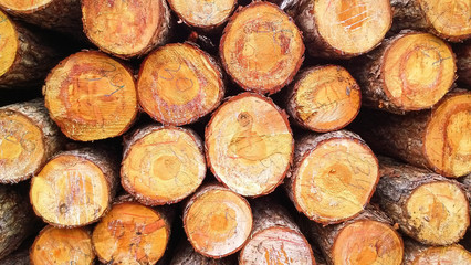 Big pile of wood