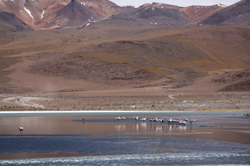 Wild untouched nature landscape with flamingos in Bolivian Andes