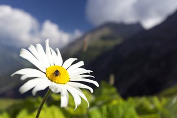 Blume weiss gelb mit Landschaft