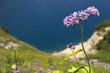 canvas print picture - Violette Blume vor blauem Wasser