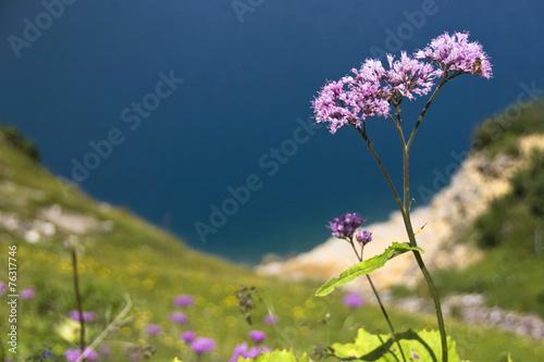 canvas print picture Violette Blume vor blauem Wasser