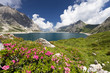 canvas print picture - Bergsee mit Alpenrosen