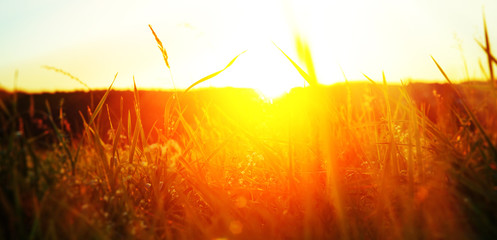 Grass in der Sonne - Grass in the sun