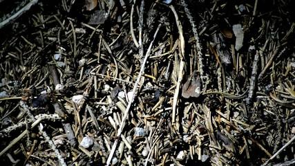 Ameisen im Wald