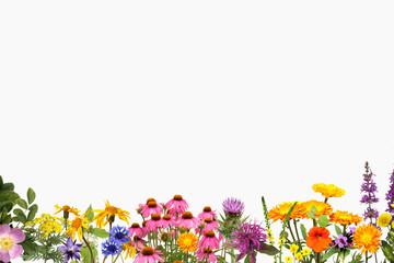 Heilpflanzenarrangement, Heilpflanzen