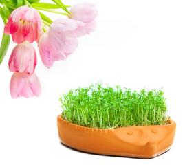 Tulpen, Kresse