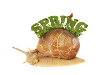 """spring background with snail and the text """"spring"""""""