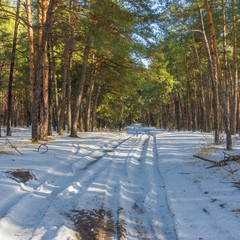 Landscape with road  to winter pine forest